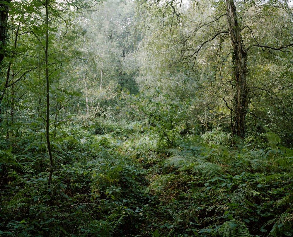 Heath 39.jpg