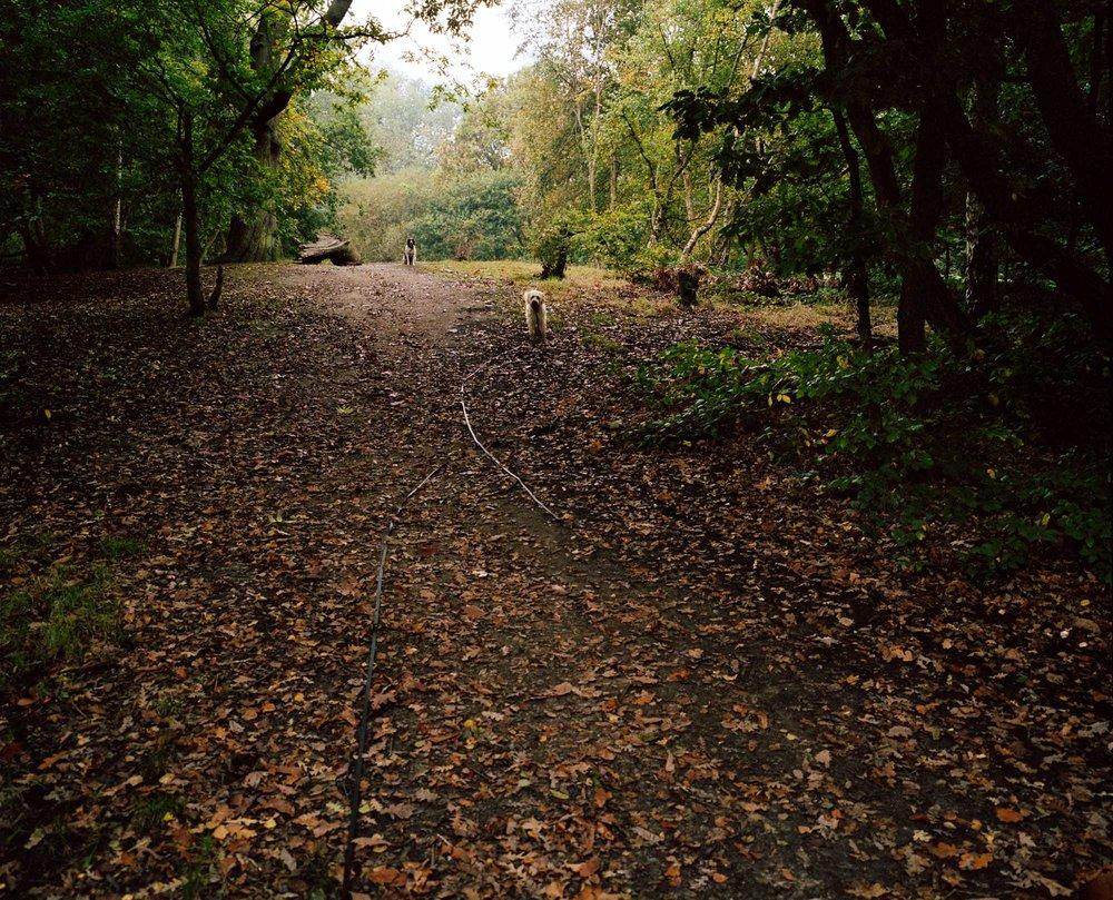 Heath 05.jpg
