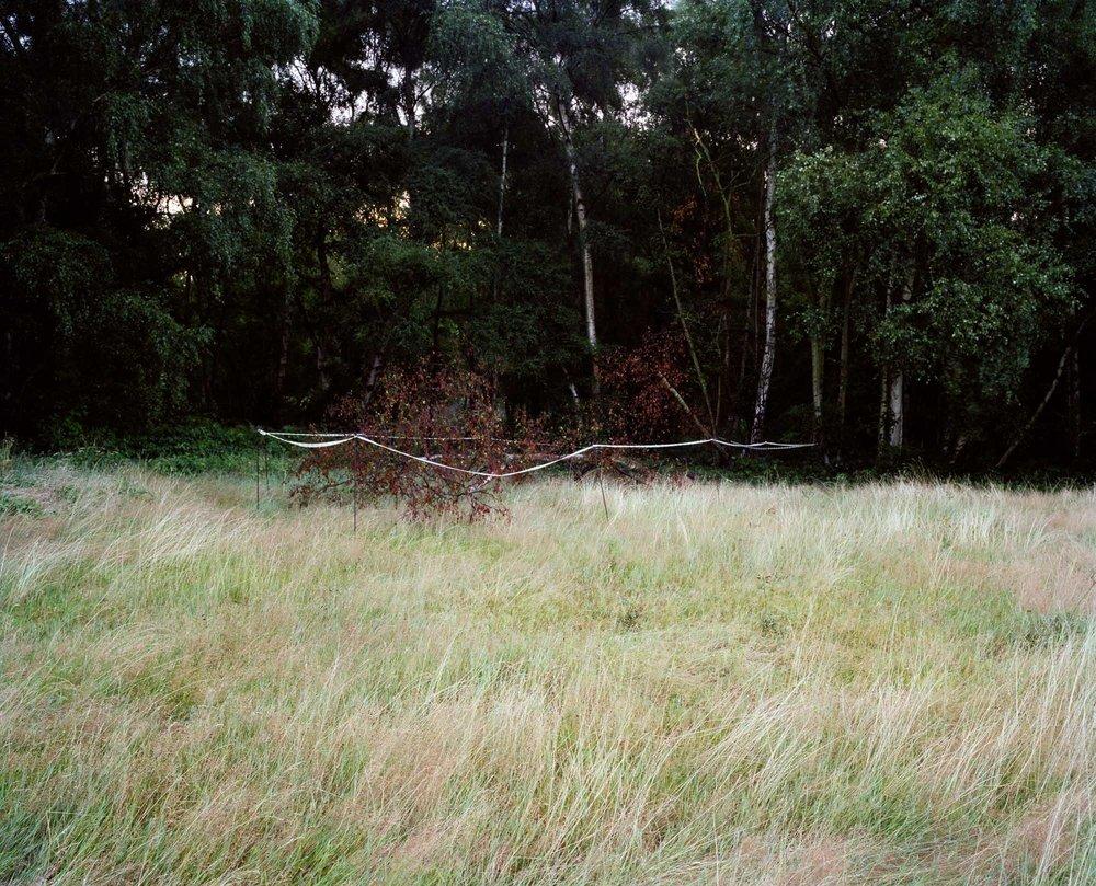 Heath 06.jpg