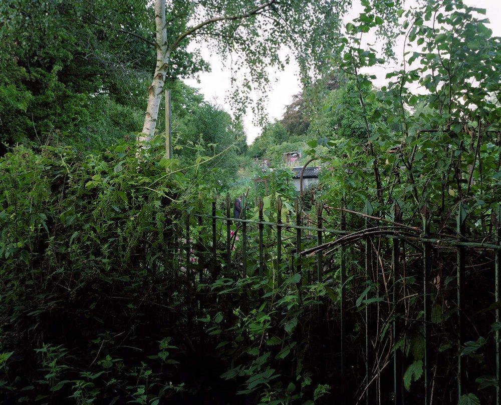 Heath 27.jpg