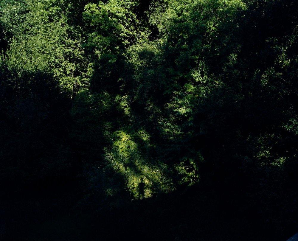 Heath 32.jpg
