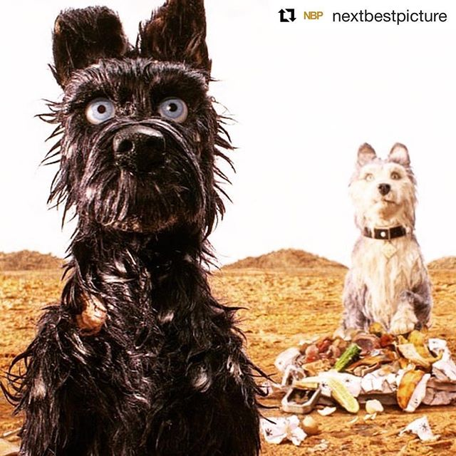 I can retire now. Wrote an entire article about dogs. Doesn't get any better than that. Link in bio. #Repost @nextbestpicture ・・・ Head on over to the Blog Page (Latest) on NextBestPicture.com (Link in Bio) to read our top movie dogs of all time