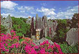 Stone Forest1.jpg