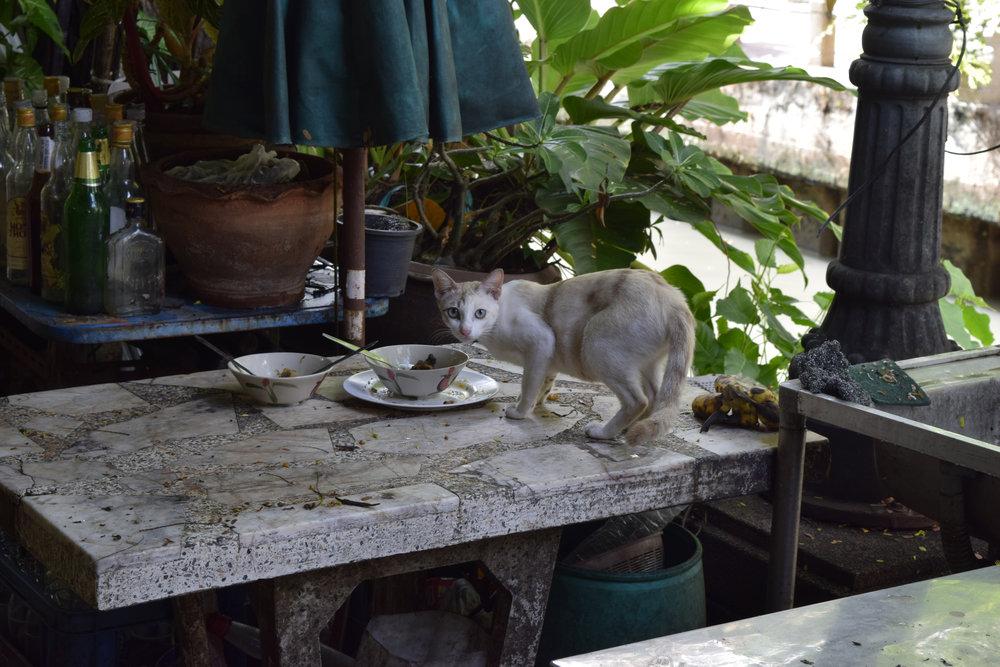 Thailand adventure 19.jpg