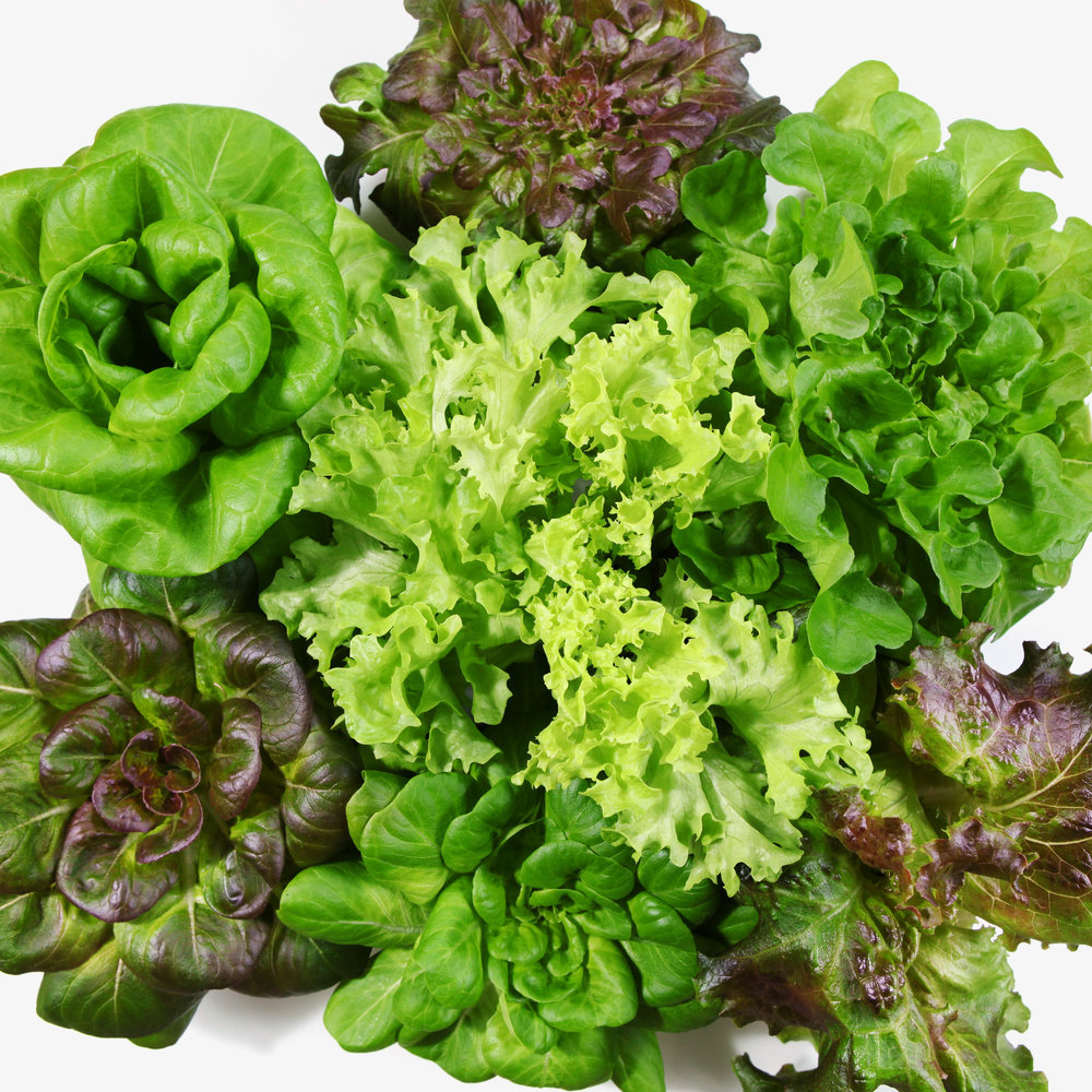 lettuce 072016_7396r.jpg