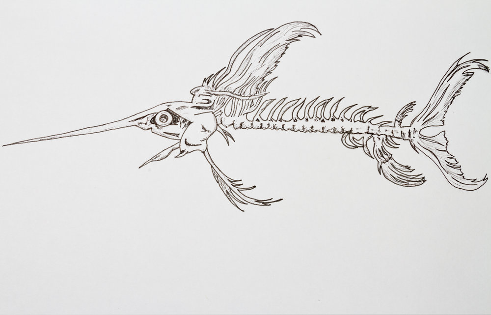 Swordfish Skeleton