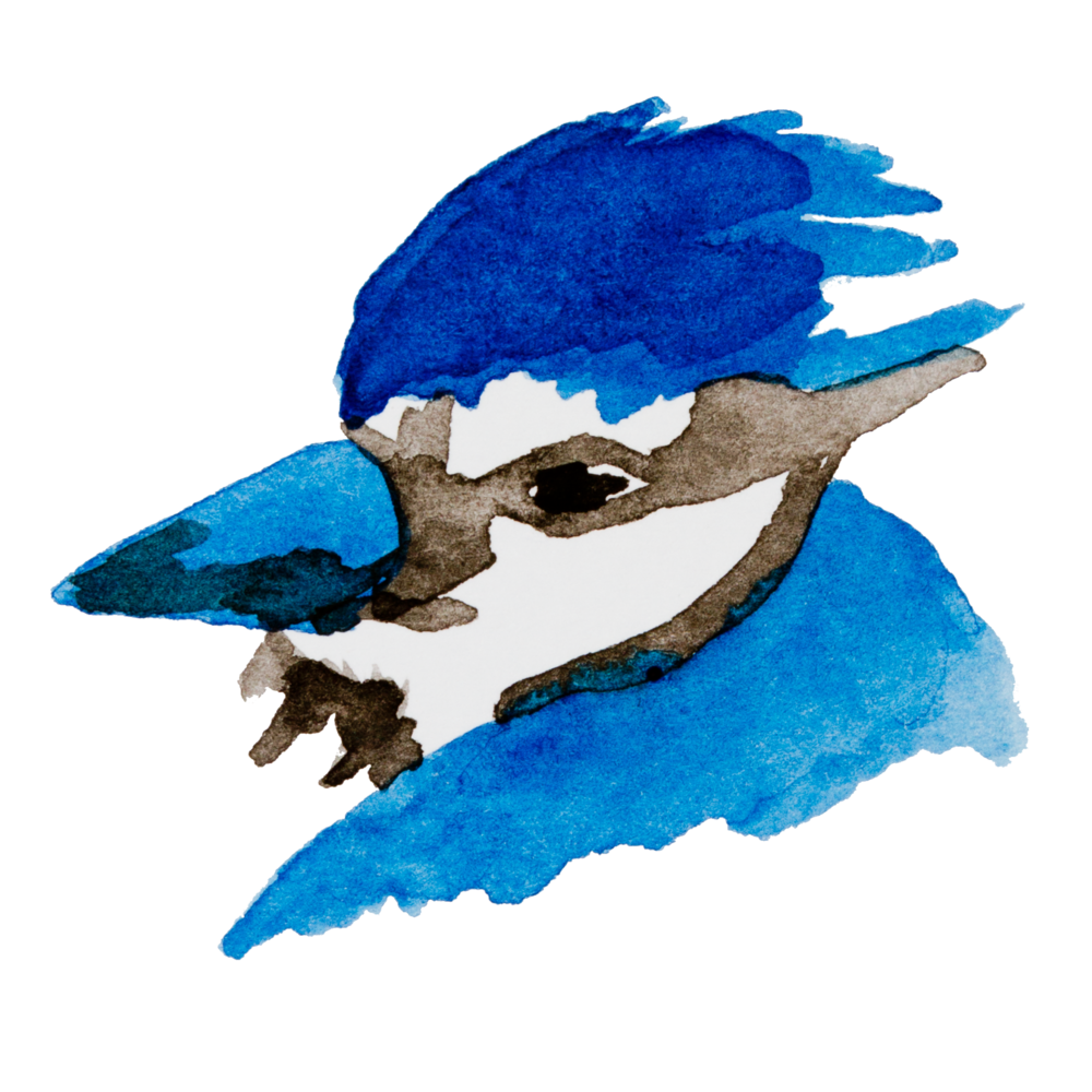 bluejay isolated.png