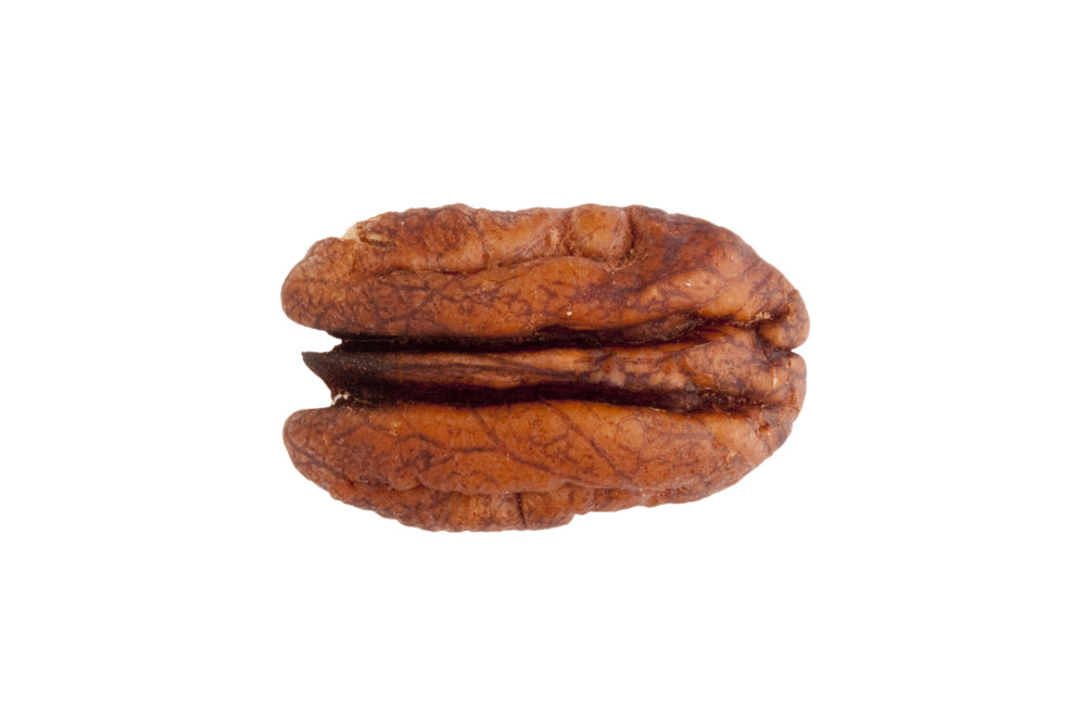 single pecan half high res.jpg