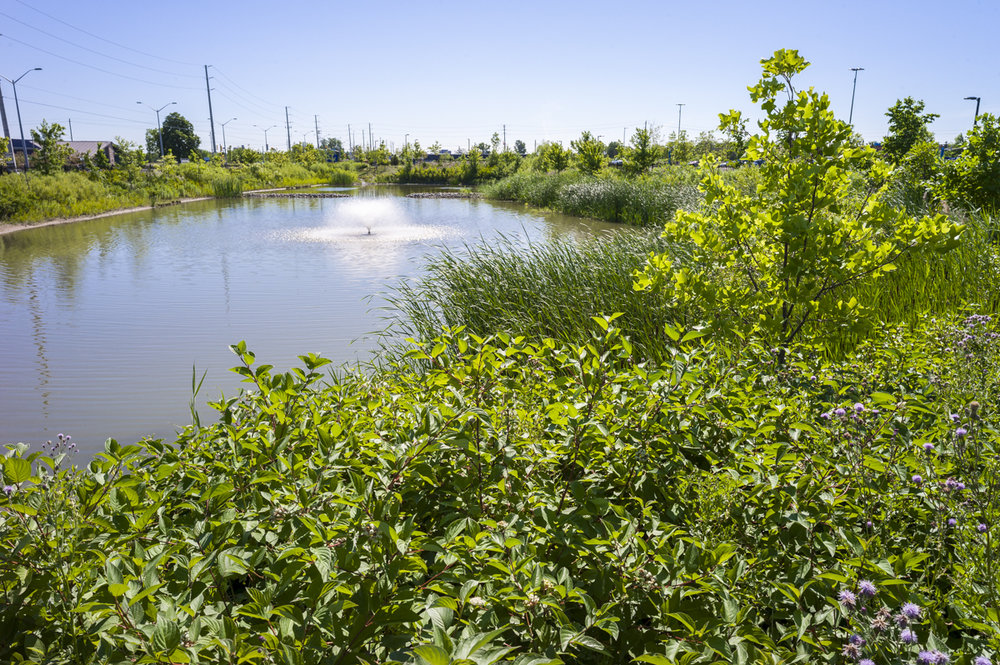 Stormwater retention pond as a landscape feature at St. Catharines Hospital, Niagara Health System