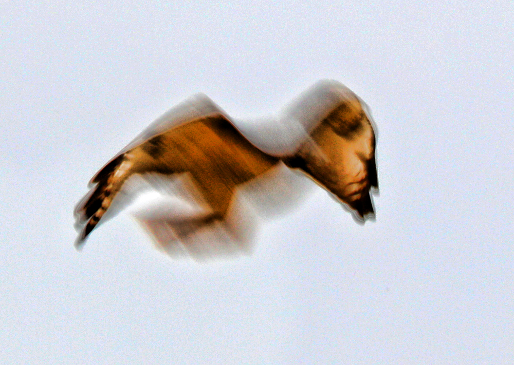 Hawk abstract