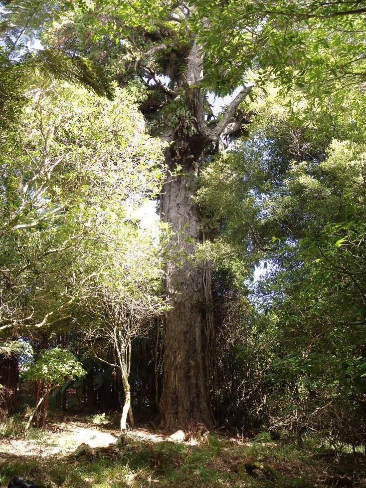 The Nail Tree