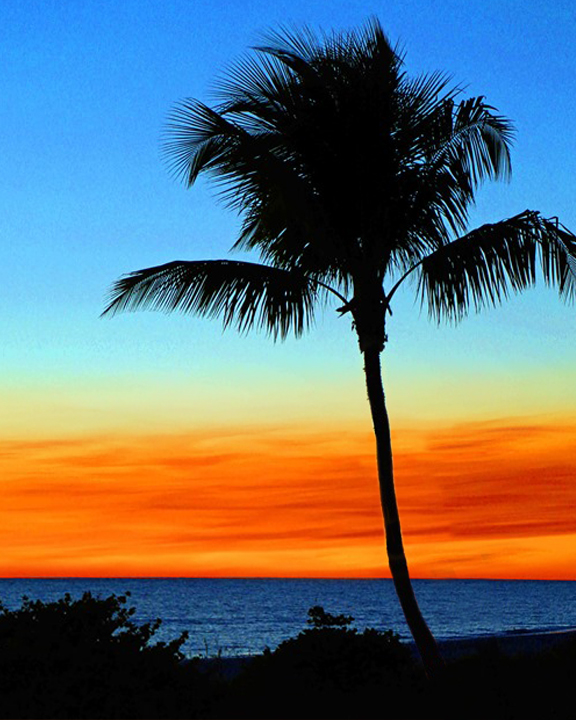 Palm-Tree-Sunset.jpg