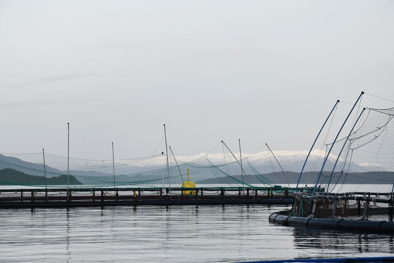 fish-farm-2.jpg