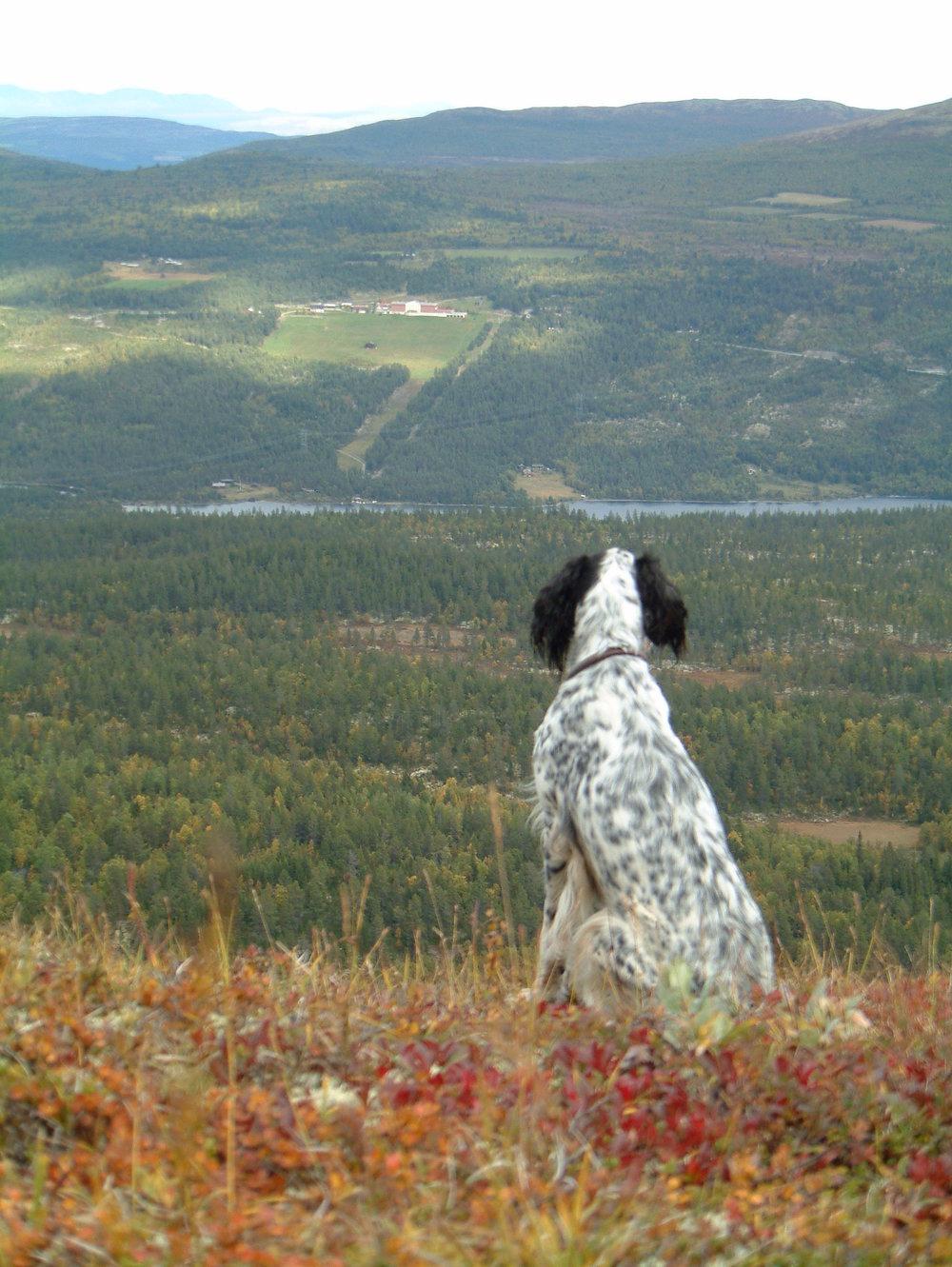 Utsikt mot Dalseter - på vei tilbake fra Storhøliseter