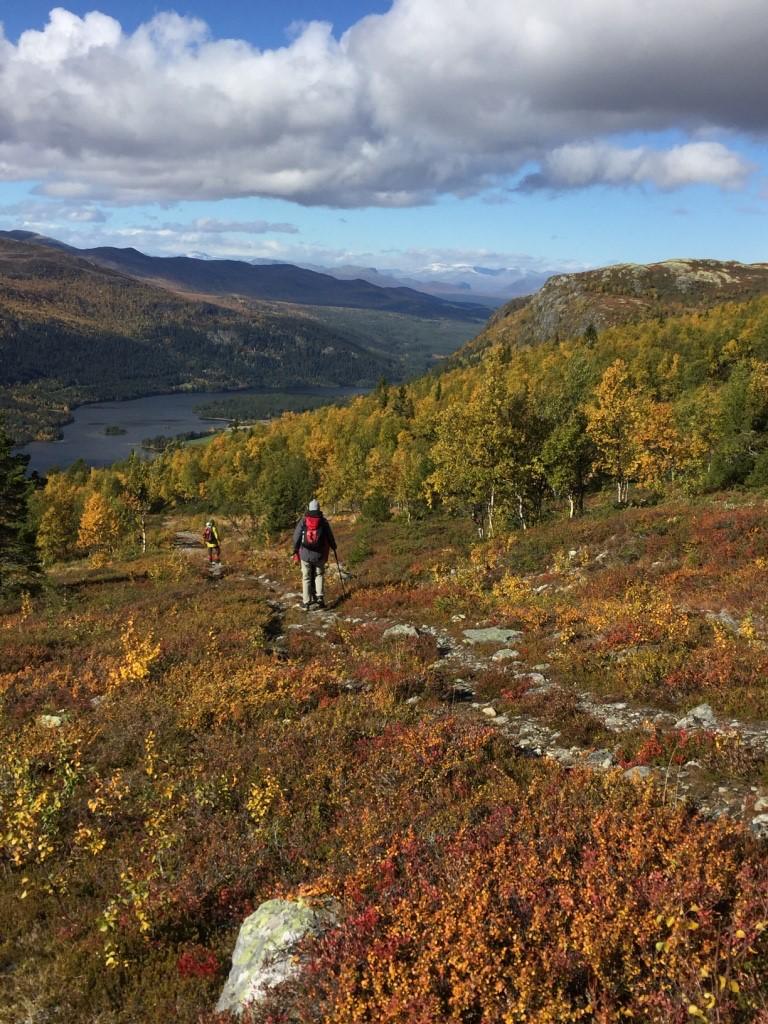 Turene går både i skog og opp i høyfjellet.