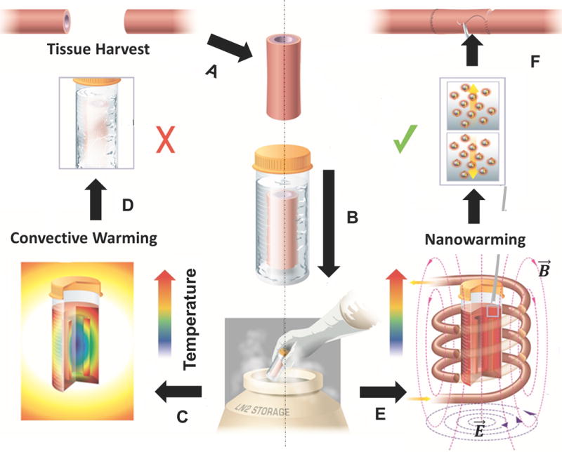 Nanowarming is uniform and controled, preventing the cracking associated with convective warming
