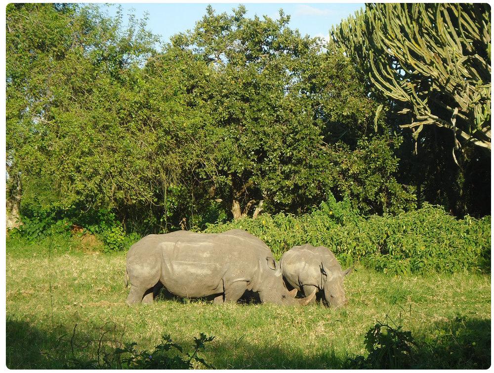 Rhino-pic-B.jpg