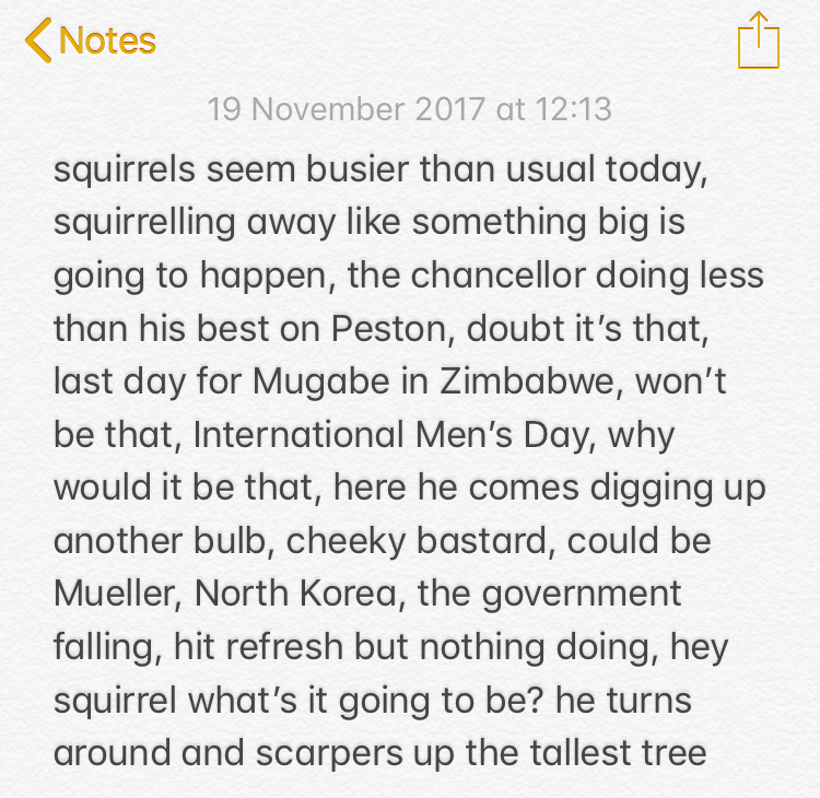 squirrel.jpg
