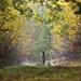 Bernwood forest (2).jpg