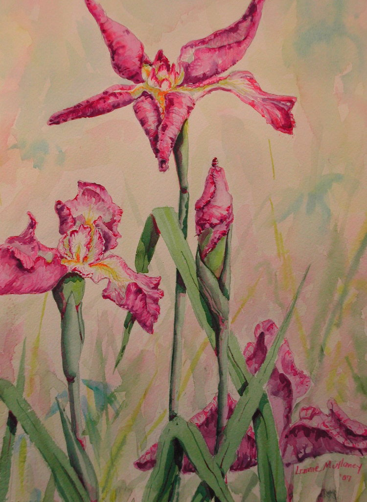Pink Iris, watercolor, 16 x 24
