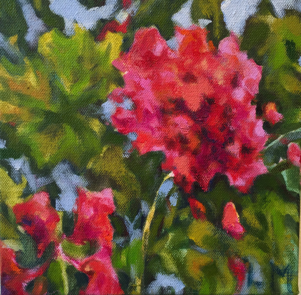 Red Geranium, oil, 8 x 8