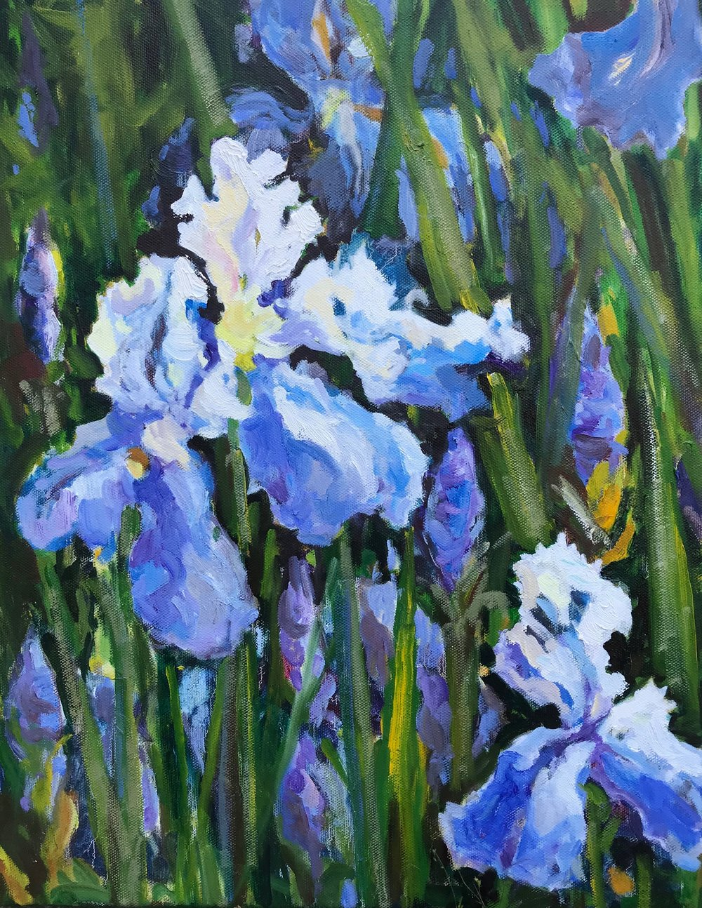 Blue Iris, oils, 14 x 18