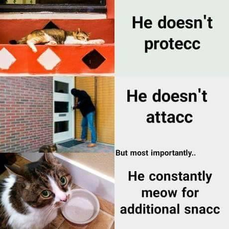 "A meme of a cat: ""He doesn't protecc / he doesn't attacc / but most importantly… He constantly meow for additional snacc"""