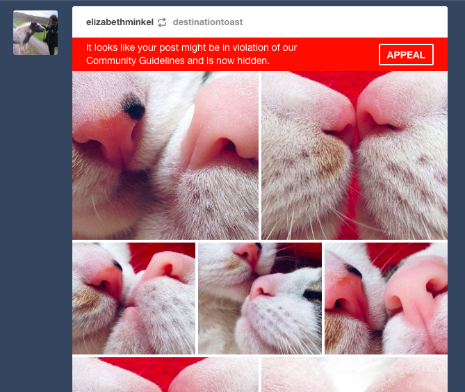Two cats' noses are very close to each other in a series of cute, zoomed-in pictures. Tumblr believes this might be in violation of community guidelines.