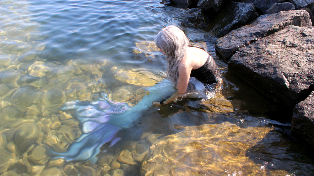 A real live mermaid is sitting on the rocks sunning her beautiful tail. Her silver hair is glimmering in the sunshine.