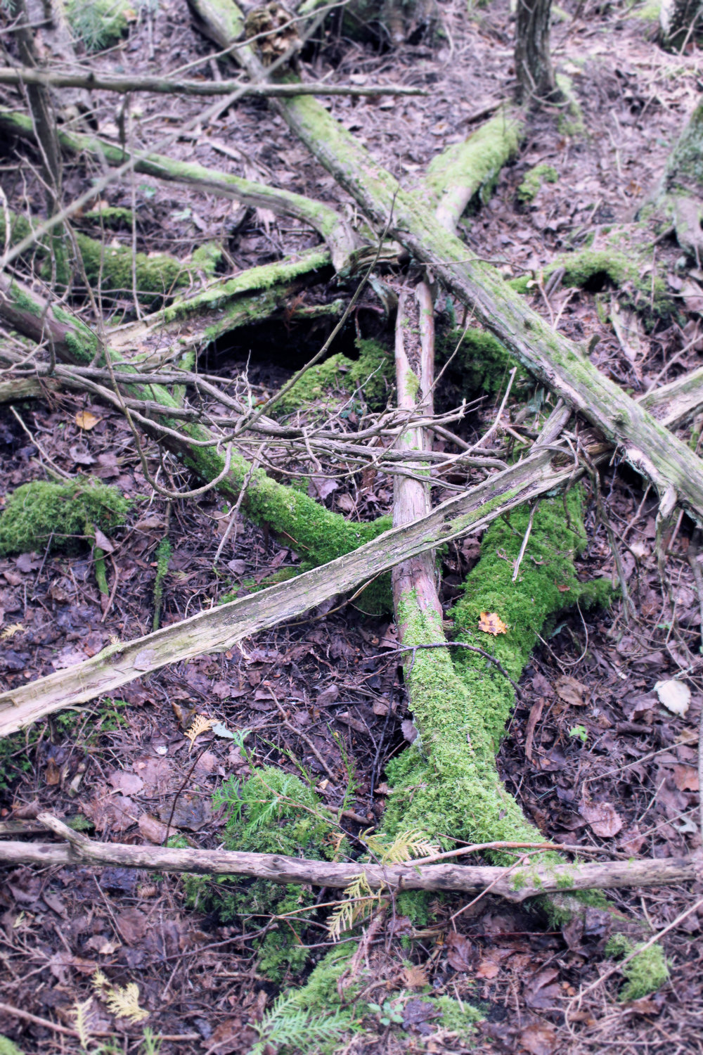 Criss-crossed logs that are covered in moss create a strange pattern in the woods. It almost looks as though they form a spiritual circle of some sort for spells or magical rituals! Perhaps they were left there by and elf?
