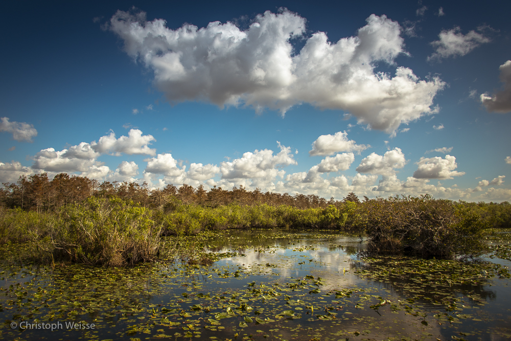 ChristophWeisse-Baden-Brugg-Aarau-Fotografie-Everglades-Miami-Florida-6.jpg