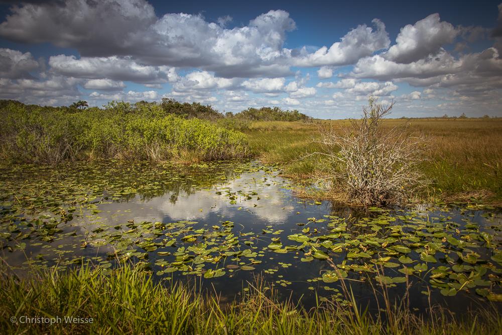 ChristophWeisse-Baden-Brugg-Aarau-Fotografie-Everglades-Miami-Florida-2.jpg