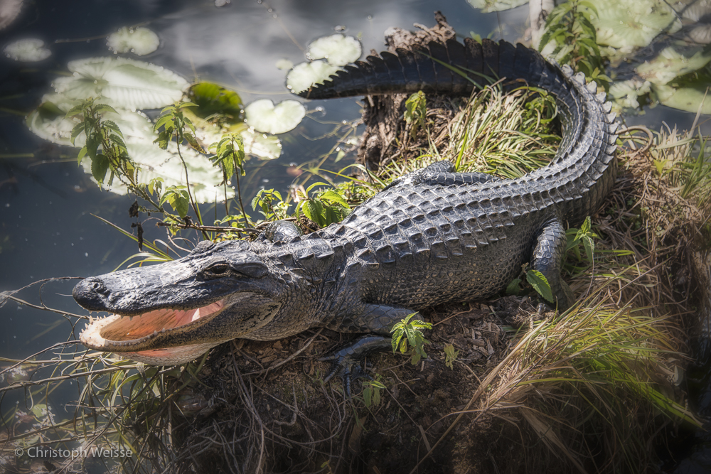 ChristophWeisse-Baden-Brugg-Aarau-Fotografie-Everglades-Miami-Florida-4.jpg