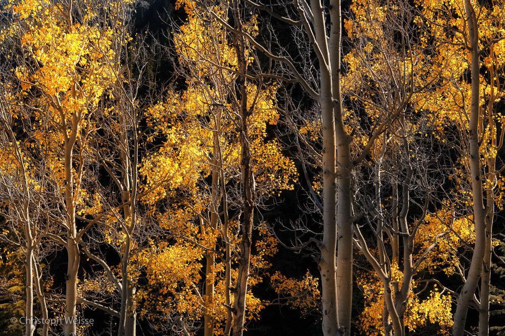 © ChristophWeisse-www.profi-foto.ch-Colorado Herbst-2.jpg