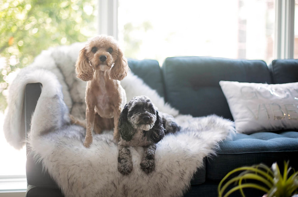 Adorn your new home with puppies