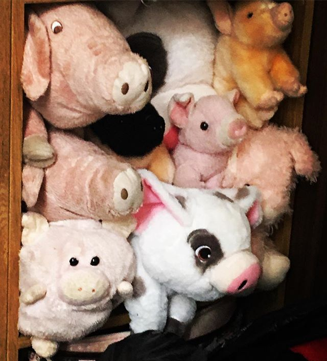 So we're all moved in! #moving #house #piggies