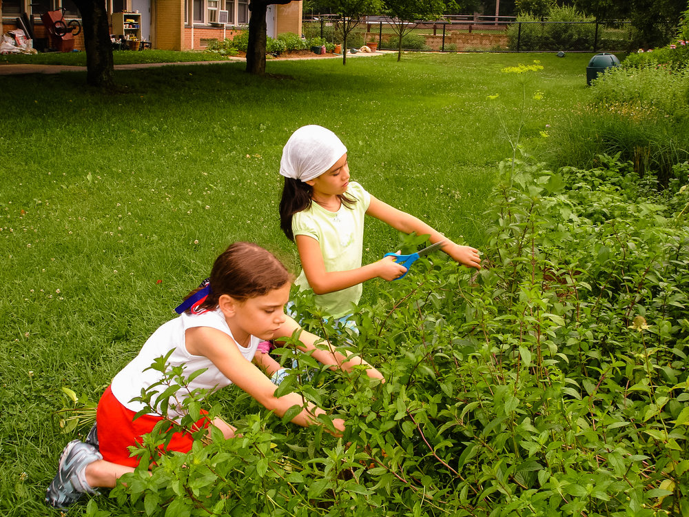 We are proud to support food and garden education in Princeton's public schools.