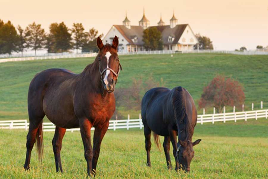 horse farm tours and bourbon trail tours are available to our guests