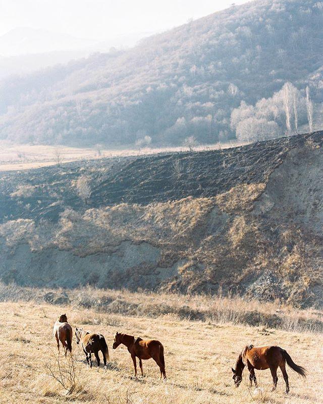Beautiful Ossetia | Сегодня хочу рассказать о чудесной Северной Осетии. Мне повезло побывать там в потрясающее время, поздней осенью, когда природа и солнце создавали потрясающие краски и оттенки ! Скажу честно, я был потрясен ее природой , очень гостеприимными жителями и невероятно чистым воздухом! Я думал после Исландии меня мало чем можно удивить, но нет, Осетия меня не только удивила, но и заставила себя в влюбится! Уверен что вернусь сюда еще не один раз! #ossetia #Fiagdon #contax645 #kodakportra #portra400 #fineart #film #filmnotdead