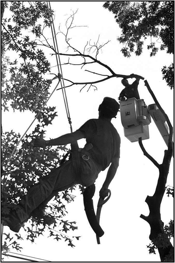 Tree climbers and pruners of the Department of Parks and Recreation, Randal's Island. 1981.