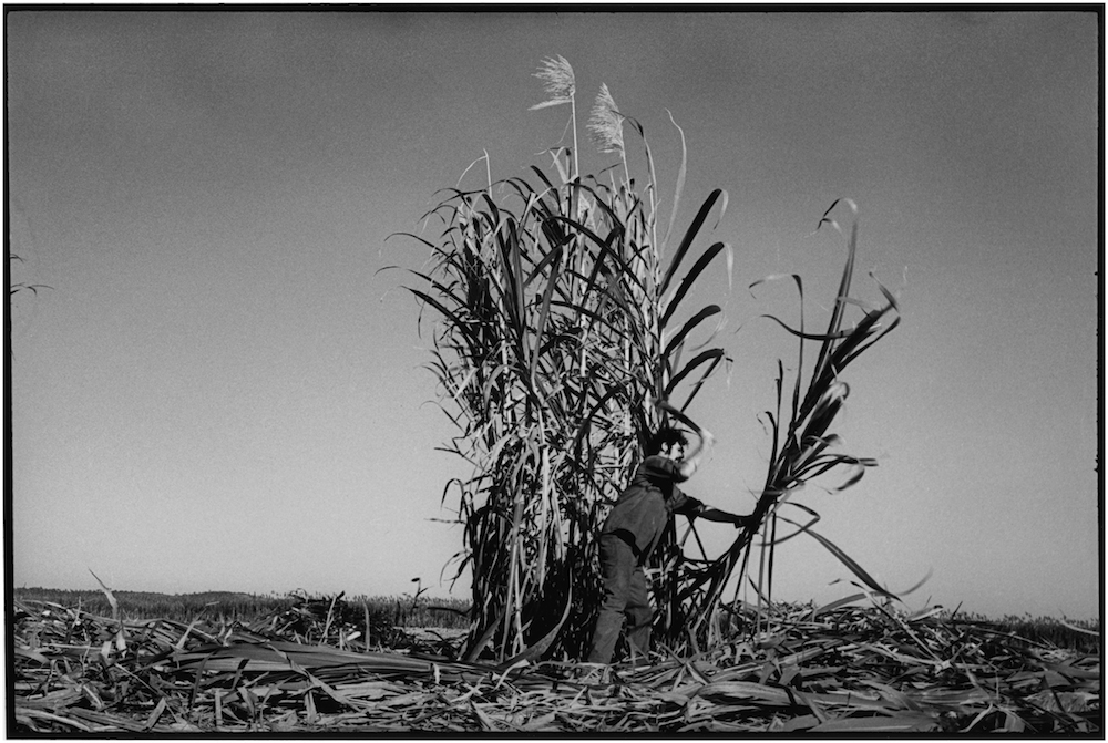 FIRST VENC BRIGADE  CUTTING CANE  1969  George Cohen    copy.jpg