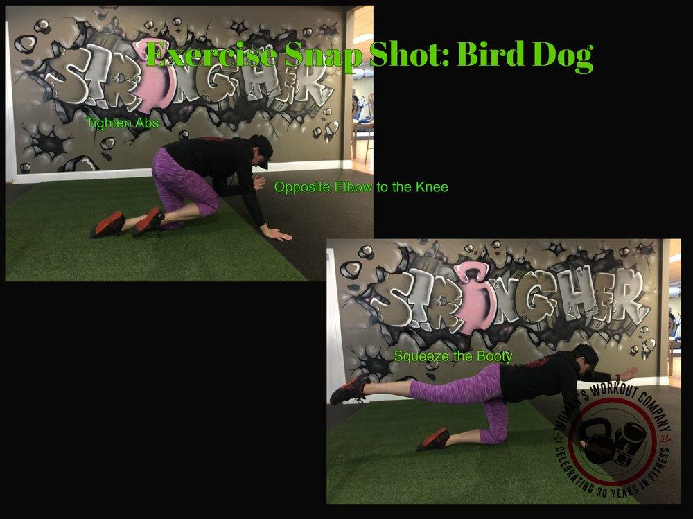BirdDog.jpg