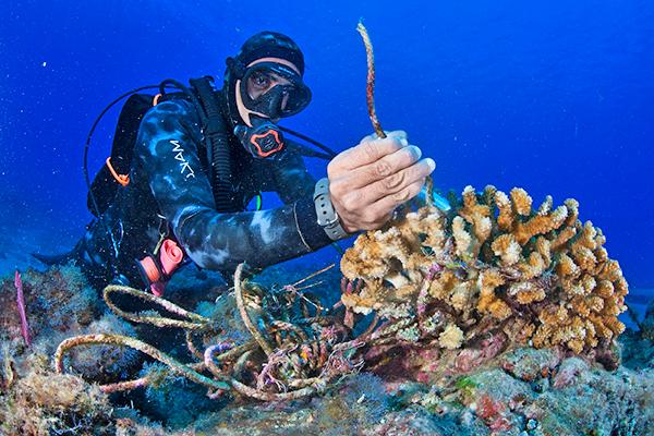 WILDCOAST - Conserving Mexico's coastal & marine ecosystems.