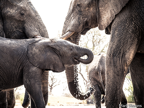 Water for Hwange - Grant Amount: $20,000Project: Helping to sustain water resources vital to wildlife and communities in Zimbabwe's largest national park.