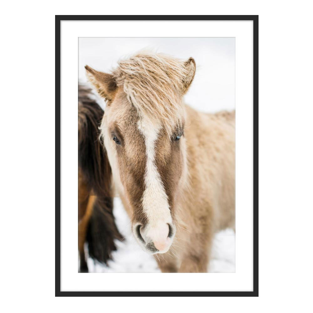 Icelandic Horse III by Robert and Tiffany Peterson for Artfully Walls