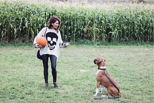 Obedient dog sitting by woman