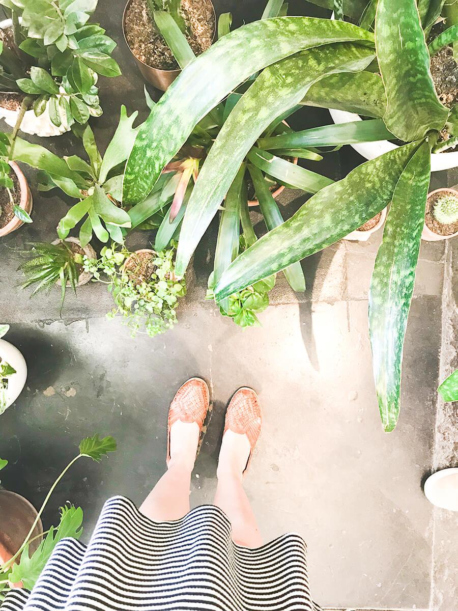 Plant-floor-covering.jpg