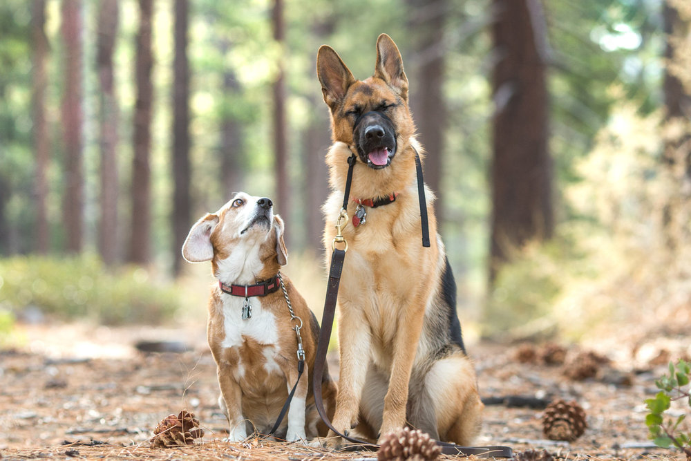 lake-tahoe-truckee-reno-carson-pet-dog-portrait-photographer-photography