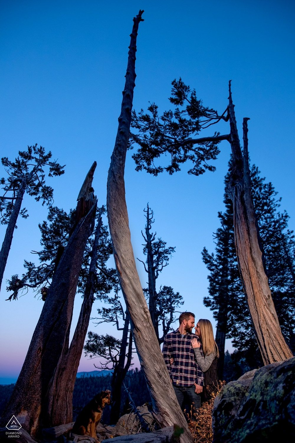lake-tahoe-wedding-photographer-photography-engagement-proposal-emerald-bay-forest-best-top-awarded
