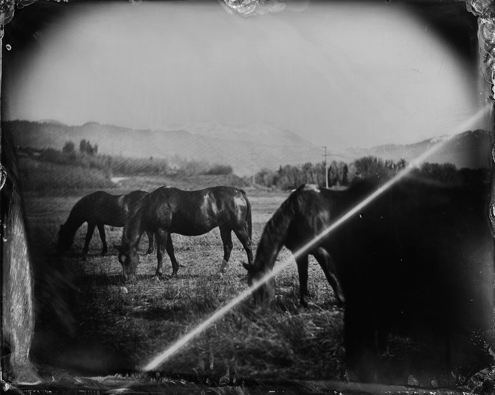 Horses and Lens Flare, Jackson WY